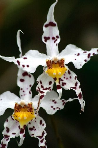 Spectacular orchid flowers. Isn't it so hard to believe that there was a time not that long ago, geologically speaking, when there were no flowers on earth. Whether you believe in God alone as the creator, or evolution, it is simply amazing. rjp