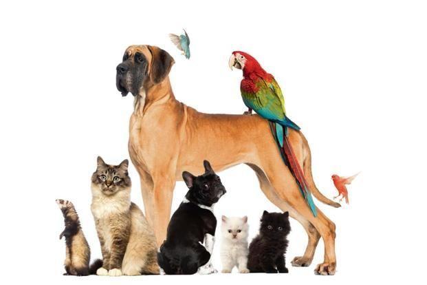 Keep Your Pets Flea Free Your Pet Pets Pet Dogs