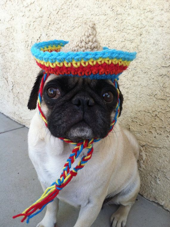 Hey, I found this really awesome Etsy listing at http://www.etsy.com/listing/130802307/hats-for-dogs-sombrero-hats-for-pugs