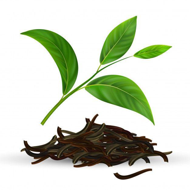 Fresh And Dry Green Tea Leaves Organic Green Tea Black Tea Leaves Green Leaf Tea