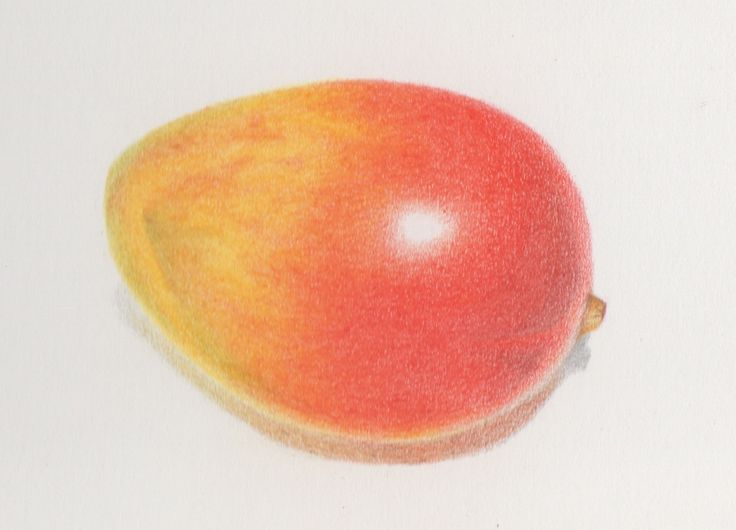 Mango - colored pencils drawing