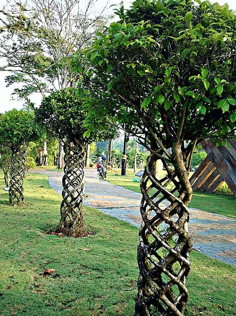 unique trees found in malaysia by mualim muslim, via Flickr