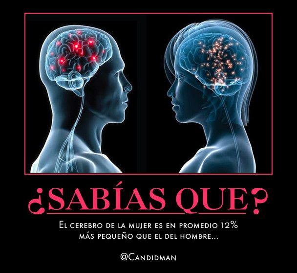 #Curiosidades El #Cerebro de la #Mujer es en promedio 12% más pequeño que el del #Hombre... @Candidman