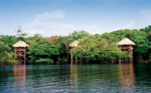 Amazon Forrest, Brazil Floresta Amazônica, Brasil  How to choose your hooneymoon destination Como escolher o destino da sonhada lua de mel   http://marionstclaire.com/como-escolher-destino-lua-de-mel