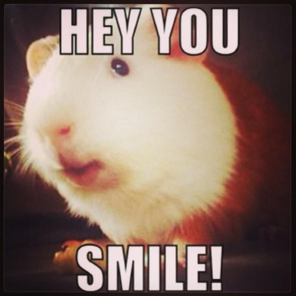 My Version Of Why You Re A Great Catch I Scored With: 50 Best Images About Guinea Pig Silliness On Pinterest