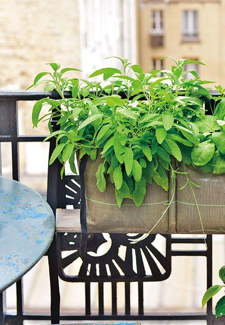 Des herbes aromatiques sur votre balcon : faites poussez de la sauge dans une jardinière accrochée en géotextile