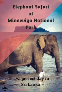Elephant Safari at Minneviya National Park ~ a perfect day in Sri Lanka