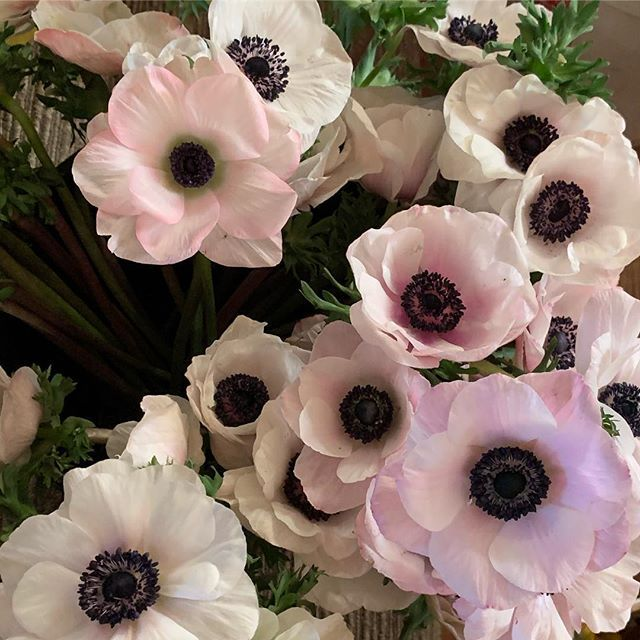 Anemones Are A Lovely Flower And The Common Name Is Windflower We Buy Locally Grown As Many As We Can Find Including Italian A Flowers Anemone Locally Grown