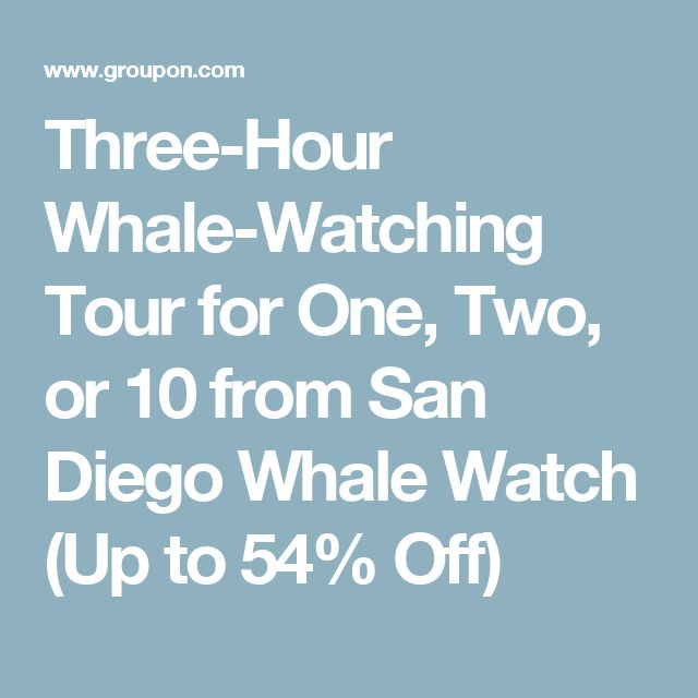 Three-Hour Whale-Watching Tour for One, Two, or 10 from San Diego Whale Watch (Up to 54% Off)
