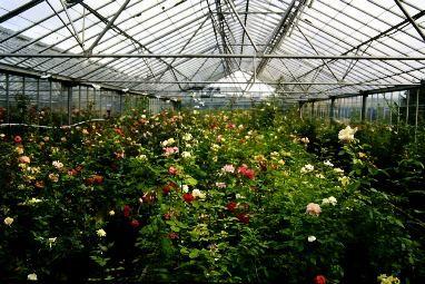The Breeding Process Seedling House in full flower
