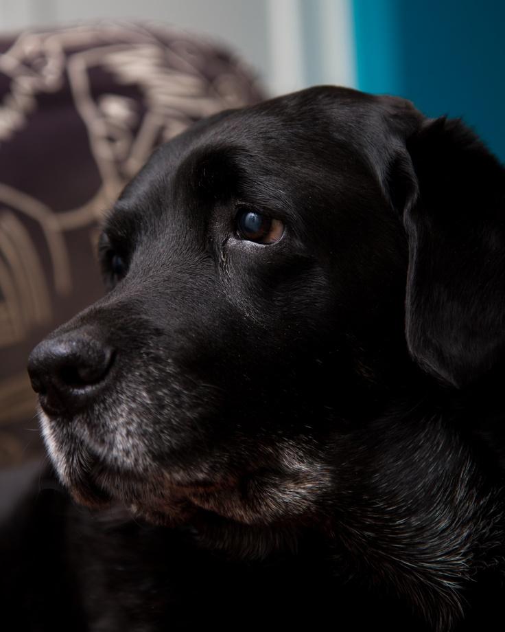 my dog pulling a sad face 1933