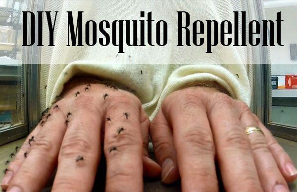 DIY Homemade Mosquito Repellent | DIY for Life