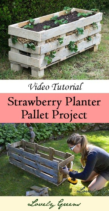 Learn how to make a strawberry planter out of a single wooden pallet. Plant the top and the spaces along the sides with strawberries to maximize your harvest - this is a fairly easy construction project and once you've made one you'll want to make more!   #gardening #pallet #palletproject #strawberries #gardenart