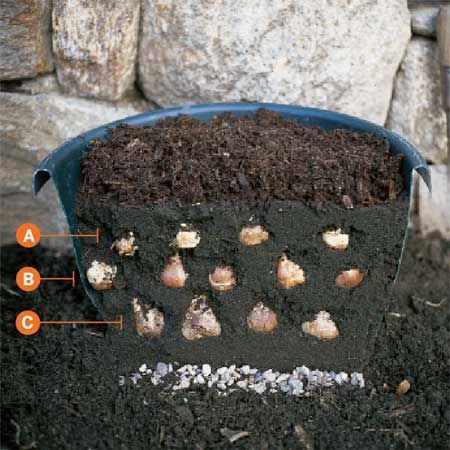"""stack"" bulbs for six weeks of blooms : bulbs staggered in container"