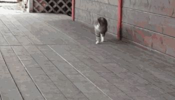 """This cat believes that the phrase """"walk of shame"""" stigmatises women's sexuality. 