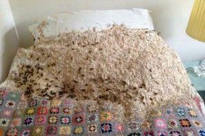 Diario de Yucatán  140827 - Internacional - Una mujer se llevó el susto de su vida al encontrar el nido de avispas formado sobre su cama.