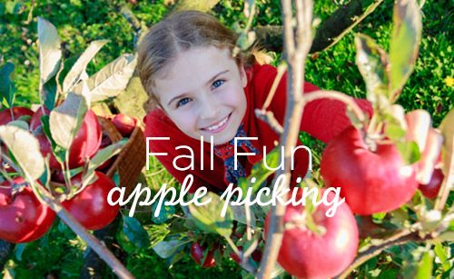 Apple Picking in and around the GTA