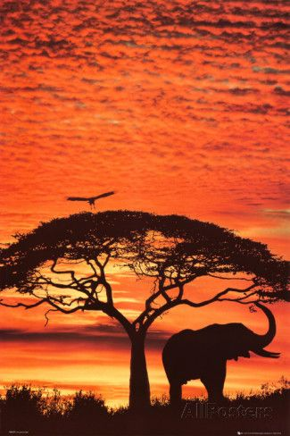African Sunset Photo at AllPosters.com