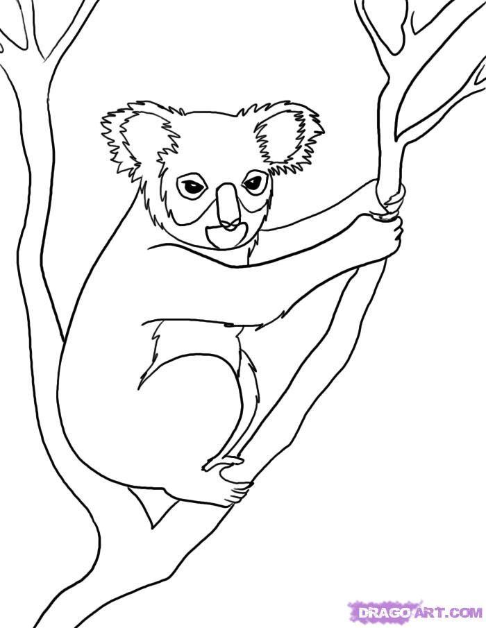 how to draw a koala bear easy