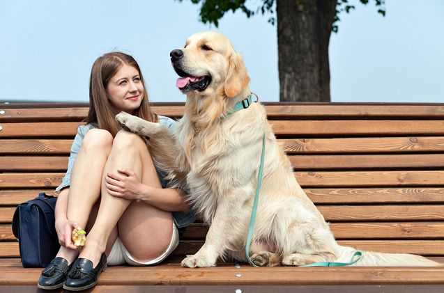 Psychiatric service dog breeds are specially trained to maintain their handler's emotional state.