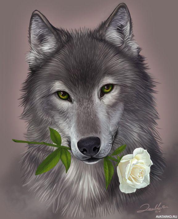 Открытки волков красивые, упада