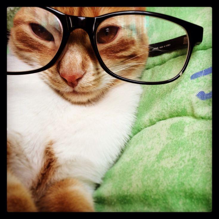 Una linda Gatica !