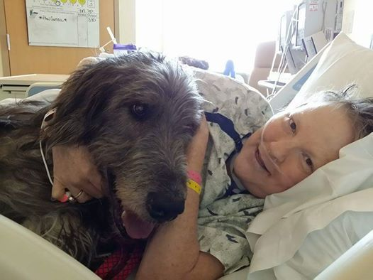 17 days after my mom passed from ovarian cancer, her old Irish Wolfhound followed in tow to be with her. I didn't know where to put this, but I wanted the world to see them. I miss them both so much. Dogs know.