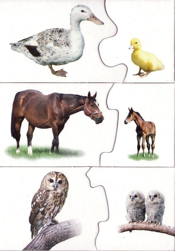 Paro4kipuzzle 4 komplekta - Aleiga V. - Веб-альбомы Picasa