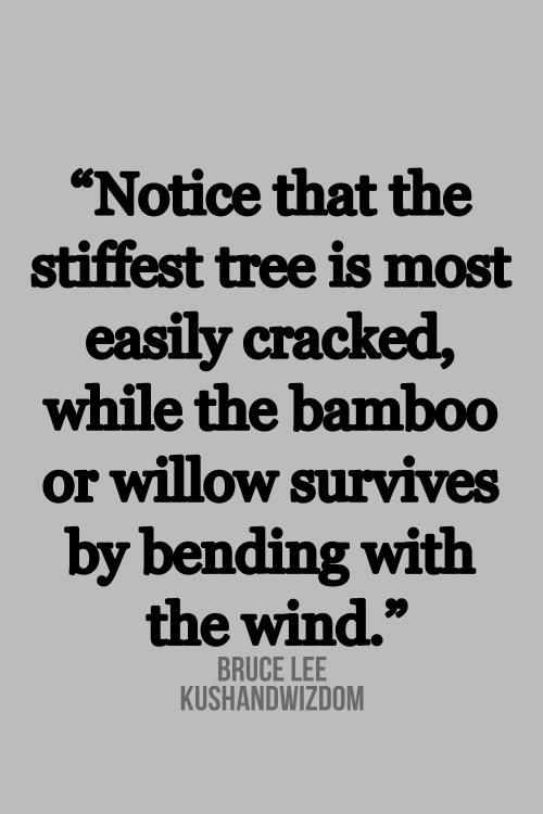 """Notice that the stiffest tree is most easily cracked, while the bamboo or willow survives by bending with the wind."" Bruce Lee #quote #inspiring #flexibility apply this to your life"
