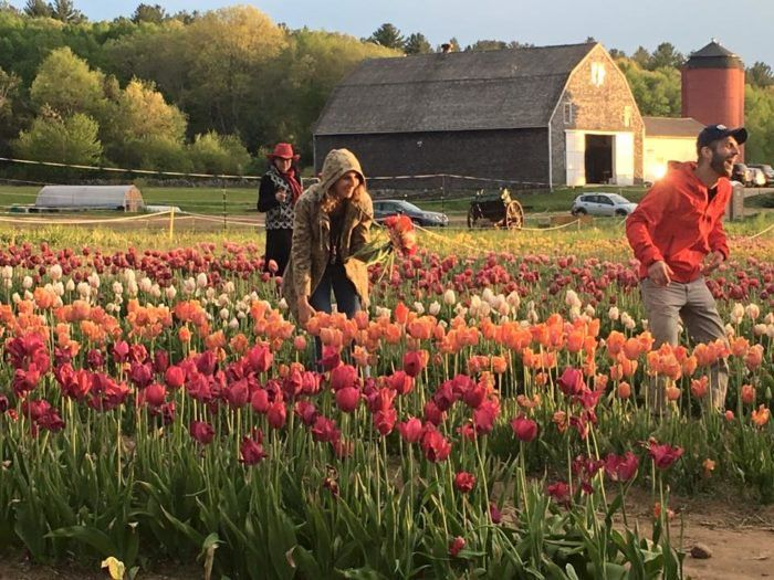 The Dreamy Tulip Farm In Rhode Island You Ll Want To Visit This Spring Rhode Island Farm Spring Bouquet