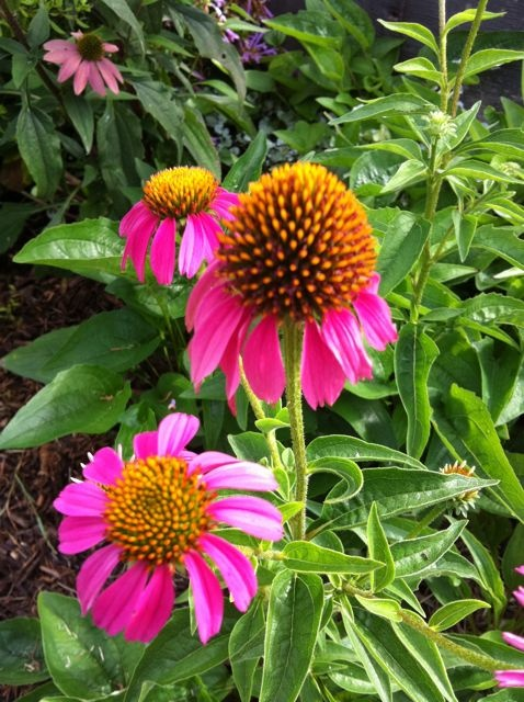 53 Best Texas Shade Garden Images On Pinterest