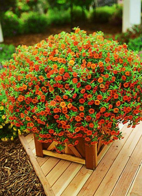 25 best bacs à fleurs pour fenêtre images on pinterest   flowers
