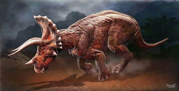 Charging Triceratops. Art Art by Yasuo D. Fucci. Triceratops is a genus of herbivorous ceratopsid dinosaur that first appeared during the late Maastrichtian stage of the late Cretaceous period, about 68 million years ago (mya) in what is now North America. It is one of the last known non-avian dinosaur genera, and became extinct in the Cretaceous–Paleogene extinction event 66 million years ago.