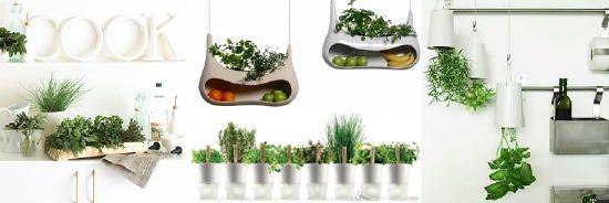 Eigen Kruiden Kweken in Pot - Binnen