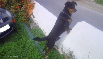 Δάφνη Χρονοπούλου: Ο σκύλος μου κι ο φίλος του
