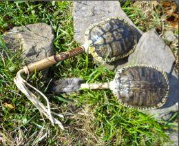 Montessori Tidbits: DIY Native American turtle rattle
