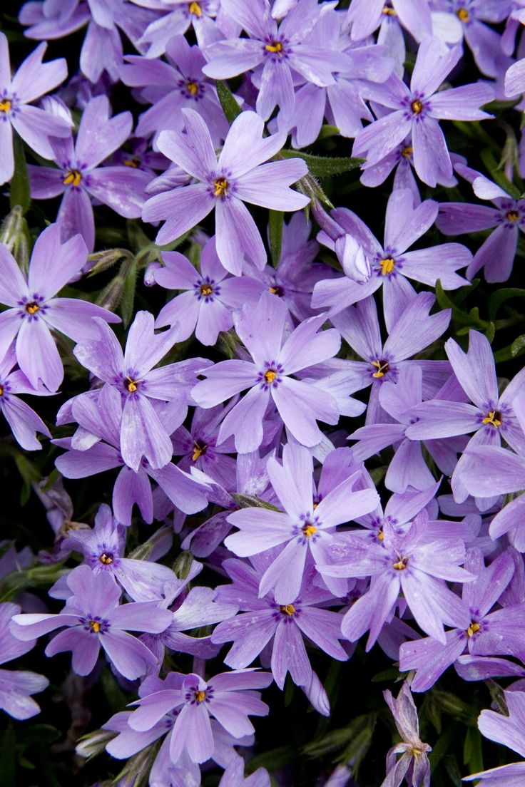 Allweather Perennial Plants You Would Love