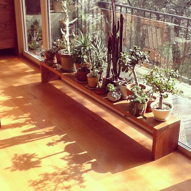 Best 25 Window plants ideas on Pinterest  Minimal