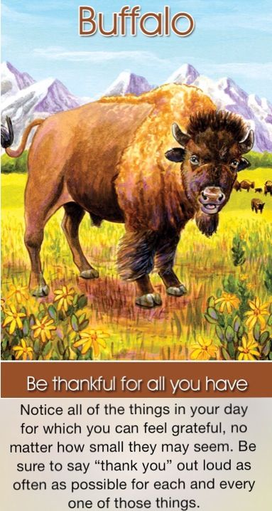 The Buffalo Spirit Animal - A Complete Guide to Meaning ...