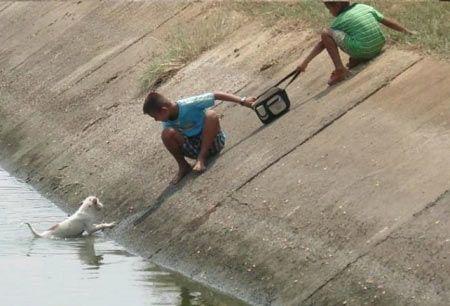 Kids Rescue Puppy: Heros Rescuers, Kids Help, Puppys, Rescue Puppy, Help Puppy, Kids Rescuing