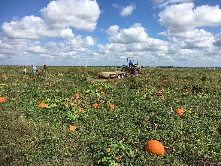 Pumpkin Patches Abound in San Antonio and Around