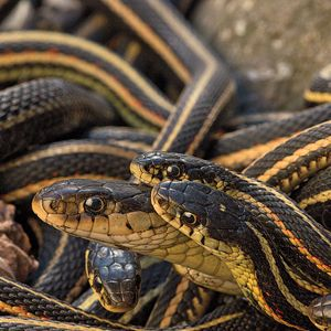 Snakes on the plains: Inside the Narcisse snake pits.