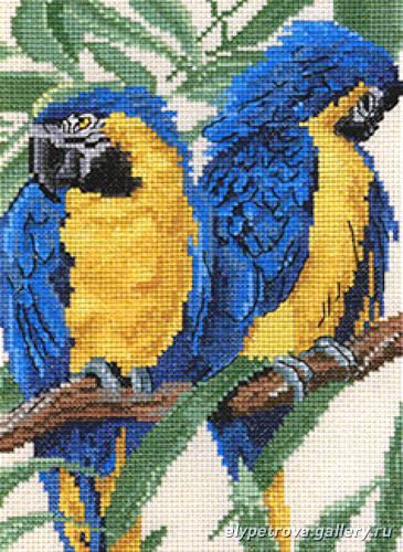 loros azules - pilar ibarz - Picasa Web Albums