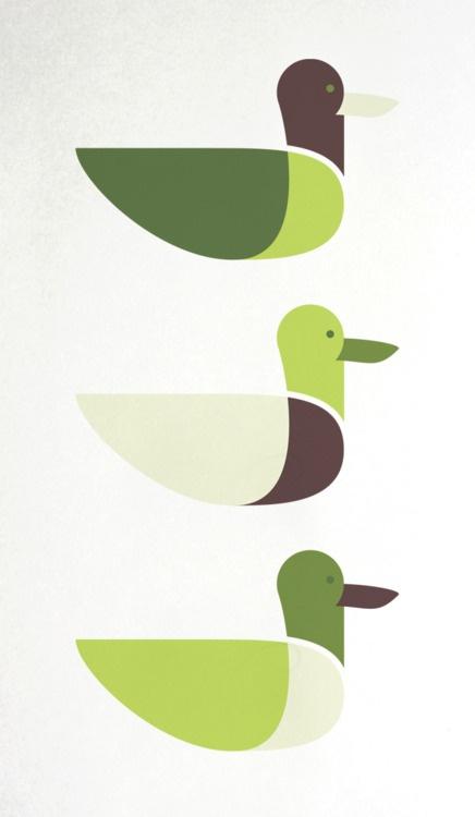 Mallard duck illustration by Emanuel Adams - ducks in a row