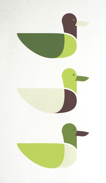 Mallard duck illustration by Emanuel Adams - ducks in a row