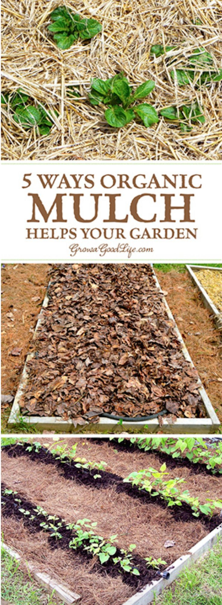 1154 best ✻ DIY Gardening Ideas ✻ images on Pinterest | Gardening ...