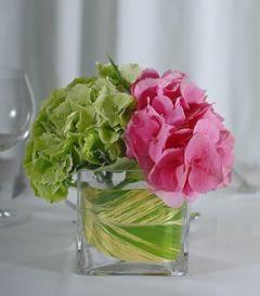 Pink & Green Hydrangea