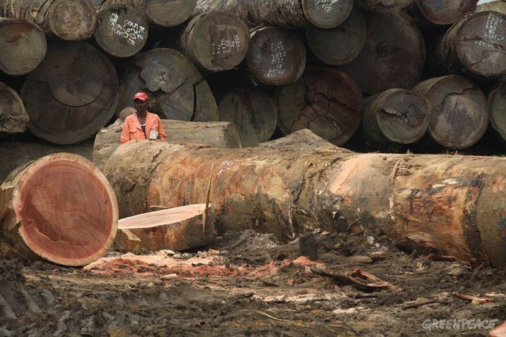 Asia Pulp and Paper conferma l'impegno verso la Deforestazione Zero