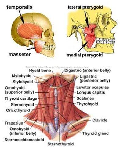Occipital Neuralgia Symptoms Causes Diagnosis