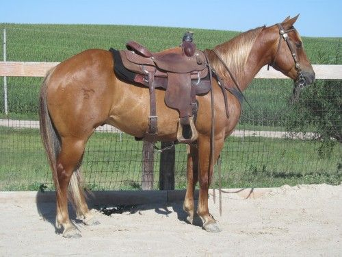 Head & Heel Horse for Sale - For more information click on the image or see ad # 48778 on www.RanchWorldAds.com